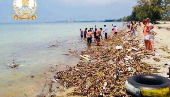 カンボジア各省庁、海水汚染対策に尽力