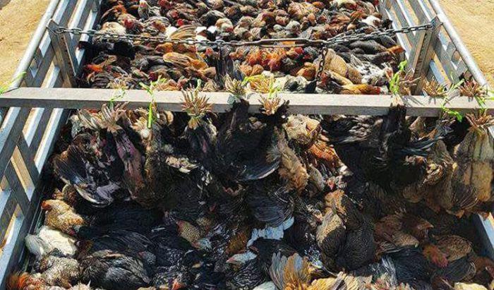 保健省、中国旧正月間の鳥インフル感染に注意喚起