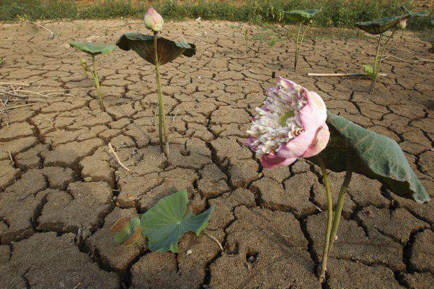 カンボジアでの干ばつ、漁業と農業に被害