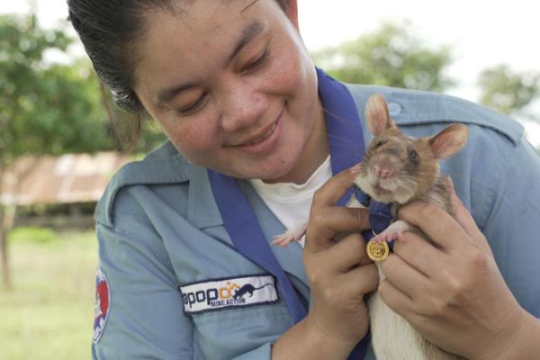 ネズミが金メダル獲得、地雷探知で人命救助のヒーローに