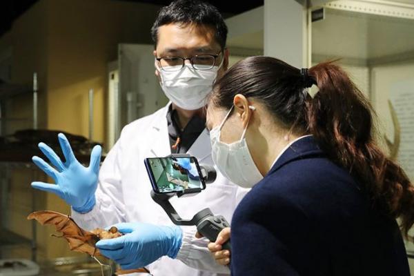 コウモリからコロナ類似ウイルスを検出、日本とカンボジアで