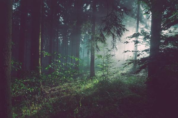 タイから不法入国の男性、森林で地雷を踏み片足失う