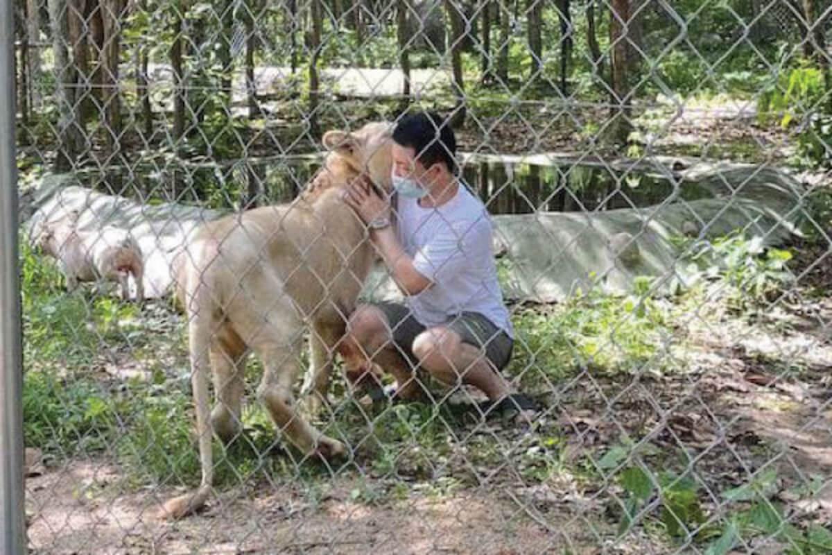 フンセン首相:ライオンを保護センターから飼い主へ戻すことに同意