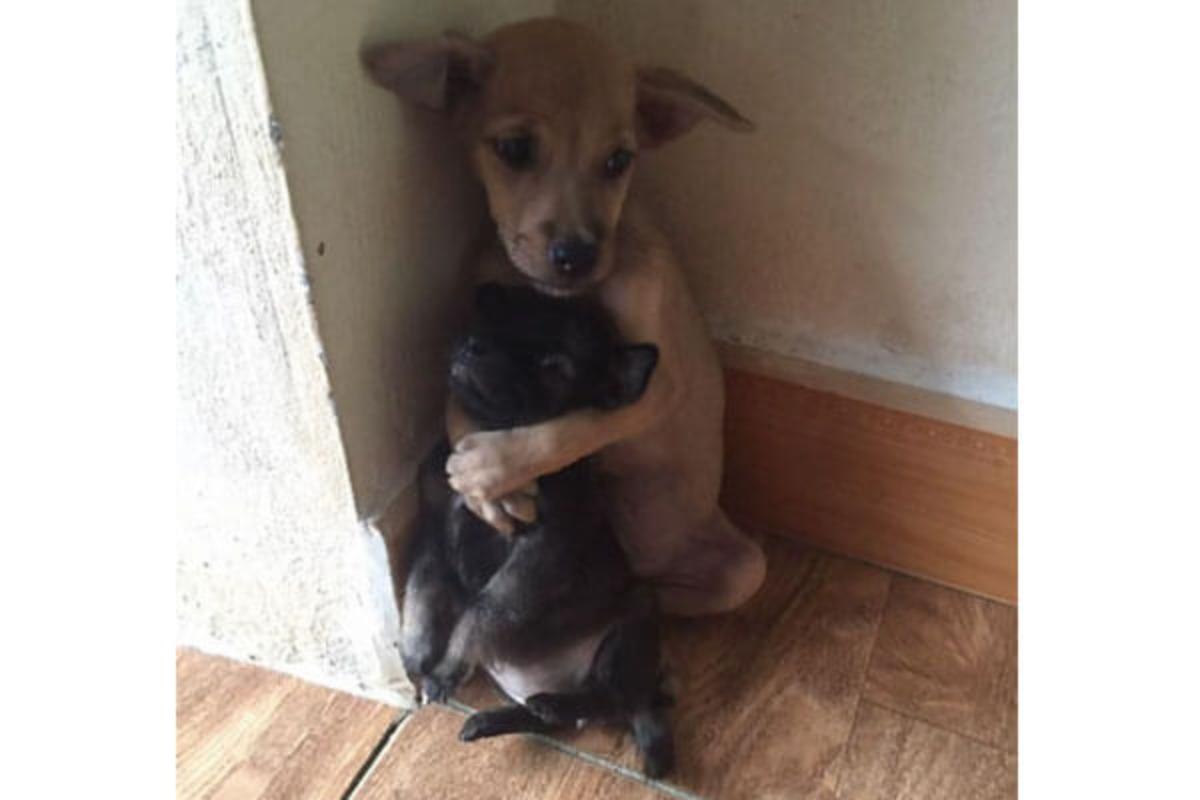 お互いを抱きしめる子犬、ベトナムで保護された子犬が話題に